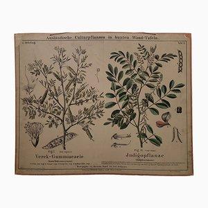 Stampa antica di un albero della gomma, fine XIX secolo