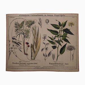 Póster antiguo de plantas de yute y ratán, década de 1870