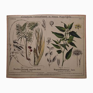Stampa antica raffigurante pianta di juta e rotang, metà XIX secolo