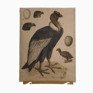 Affiche Antique Condor, 1890s