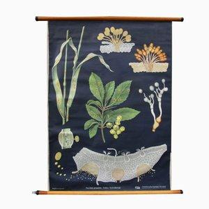 Póster escolar de botánica vintage de Jung, Koch, & Quentell para Hagemann