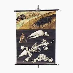 Affiche d'École avec Faune et Flore et Mole Vintage de Lehrmittelverlag Hagemann