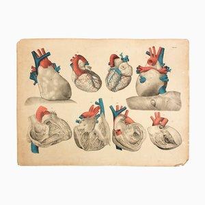 Póster educativo del corazón de M. J. Weber, 1830