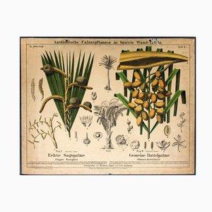 Póster sobre la palma de sagú y la palma datilera de Hermann Zippel & Carl Bollmann, 1877