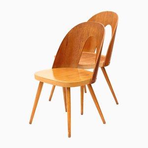 Chaises en Contreplaqué par Antonín Šuman pour Tatra, 1960s, Set de 2