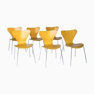 Butterfly Chairs Vintage 3107 Laminées par Arne Jacobsen pour Fritz Hansen, Set de 6
