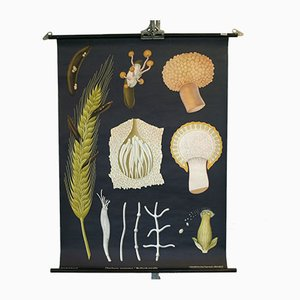Cartellone educativo vintage con funghi