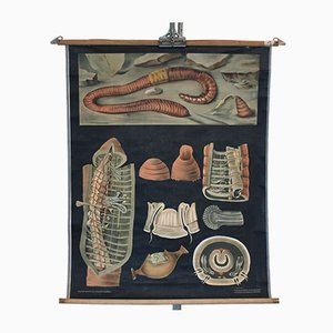 Affiche Earthworm Vintage