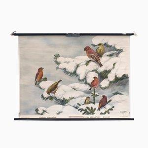 Affiche d'Ecole Birds par Nils Tiren pour Nordstedt & Söner, 1931