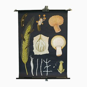 Stampa scolastica vintage raffigurante funghi