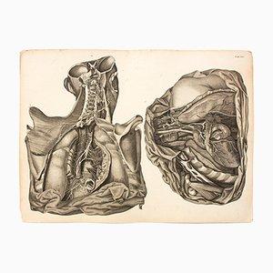 Póster del cuerpo humano de M. J. Weber para Arnz & Company, 1830