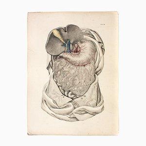 Cartel con anatomía del cuerpo humano alemán antiguo de M. J. Weber for Arnz & Company, 1830