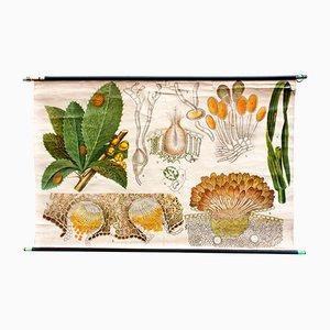 Affiche Botanique par Otto Schmeil, 1899