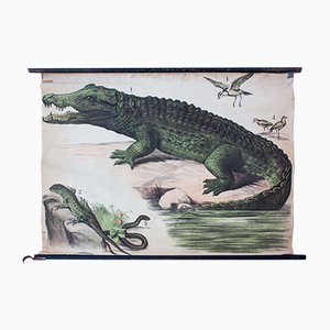 Krokodil Lithographie von J. F. Schreiber, 1893