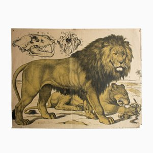 Litographie Lion par J. F. Schreiber, 1889
