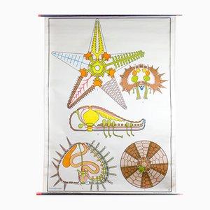 Affiche Murale Etoile de Mer par Dr. Lip pour Gerhard Gambke, 1969