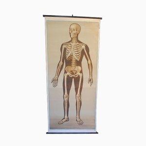 Póster educativo vintage del esqueleto humano