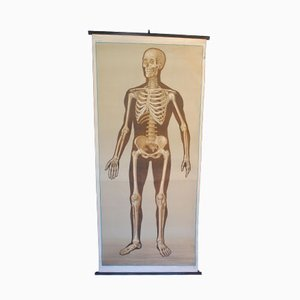 Vintage Skeleton Educational Chart