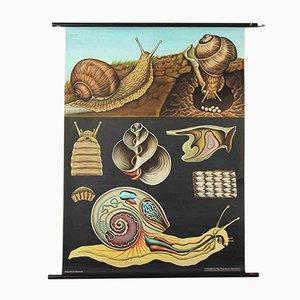 Tableau Weinbergs Snail par Jung, Koch, and Quentell pour Hagemann, 1960s