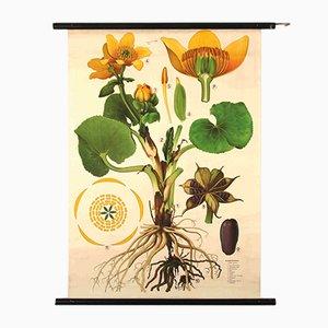 Cartel Marigold de Jung, Koch, & Quentell para Hagemann, años 60