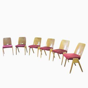 Chaises de Salon Mid-Century en Hêtre & Daim, Tchécoslovaquie, Set de 6