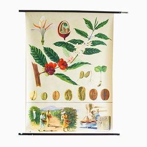 Botanische Vintage Schulwandkarte von Jung, Koch & Quentell für Hagemann