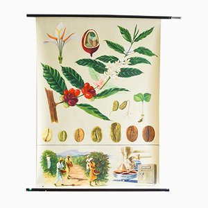 Vintage Botanical School Poster by Jung, Koch & Quentell for Hagemann