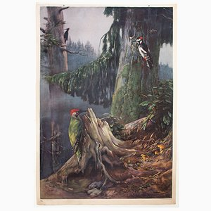 Póster del pájaro carpintero de F. Zerritsch, 1954
