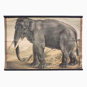 Póster educativo con elefante de Meinhold & Söhne, 1891