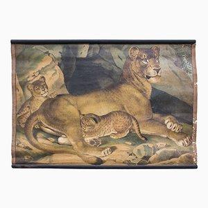 Póster educativo con león, 1891