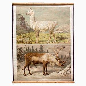 Póster antiguo con ciervo y reno de Th. Breidwiser para Gerold & Sohn, 1879