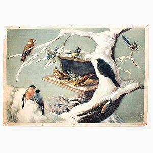 Póster educativo vintage con pájaros