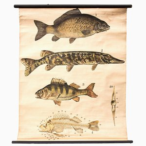 Fish Wall Chart by Franz Engleder for J. F. Schreiber, 1893