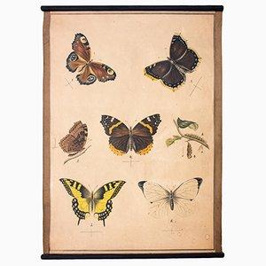 Stampa raffigurante farfalle, 1914