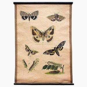 Litografía educativa con mariposas, 1914