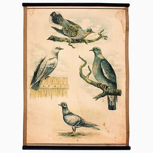 Póster educativo con pájaros, 1914