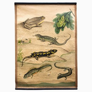 Amphibien Wandplakat, 1914