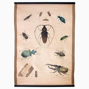 Käfer Wandplakat, 1914