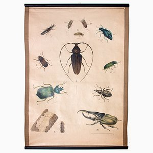 Tableau Éducatif Insectes, 1914