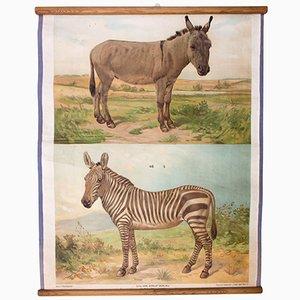Póster de pared con burro y zebra de Th. Breidwiser para Carl Gerolds Sohn, 1879