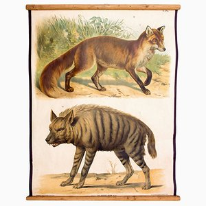 Hyena & Fox Wall Chart by Th. Breidwiser for Carl Gerolds Sohn, 1879