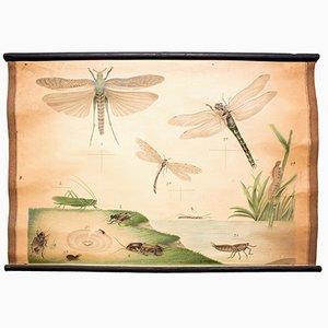 Mapa educativo con libélula de C. C. Meinhold & Söhne, 1891