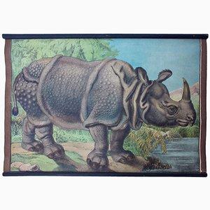 Póster educativo bohemio con rinoceronte de Karl Jansky, 1897