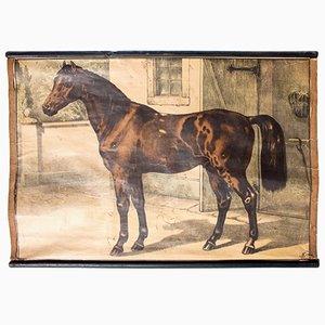 Póster educativo bohemio con caballo de Karl Jansky, 1897