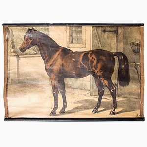 Stampa bohémien raffigurante un cavallo di Karl Jansky, 1897