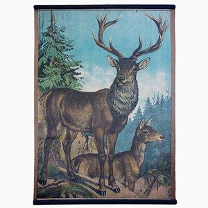 Stampa raffigurante un cervo di Karl Jansky, 1891