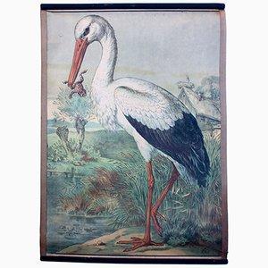 Böhmisches Storch Wandplakat von Karl Jansky, 1897