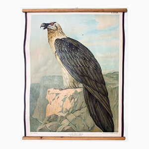 Antique Wall Chart of a Vulture by Th. Breidwiser for Gerold & Sohn, 1879