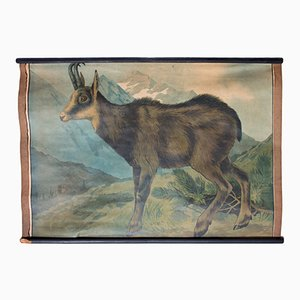 Litografia di una capra di montagna di Karl Jansky, 1897
