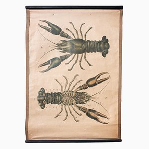 Lithograph Educational Chart of a Lobster by Karl Jansky, 1914